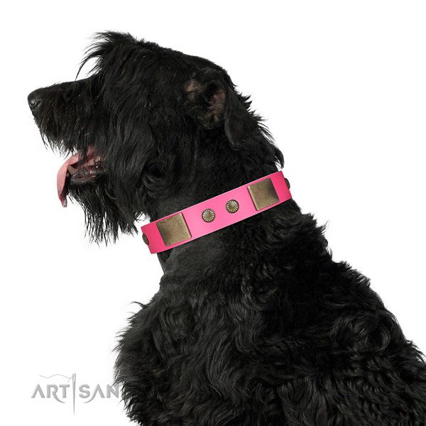 Rust resispinkt hardware on full grain natural leather dog collar for stylish walking