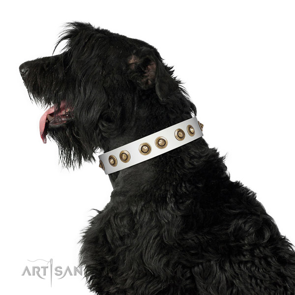 Daily use dog collar of genuine leather with amazing studs