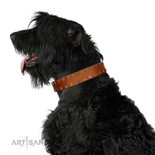 Daily walking top notch full grain natural leather dog collar with adornments