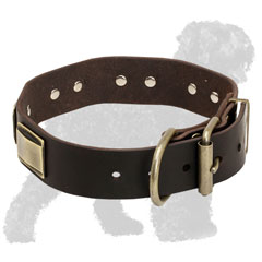 Training Brass Plated Leather Russian Terrier Collar with Strong Buckle