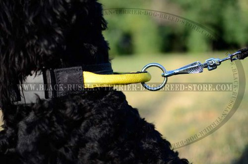 Easy walking collar for Black Russian Terrier