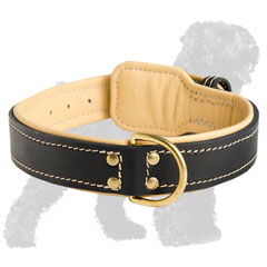 Walking Leather Padded Dog Collar for Russian Terrier with D-ring