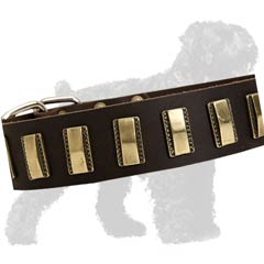 Leather Collar with Brass Plates