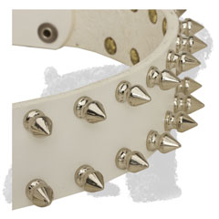 Decorative Spikes on Walking White Leather Russian Terrier Collar