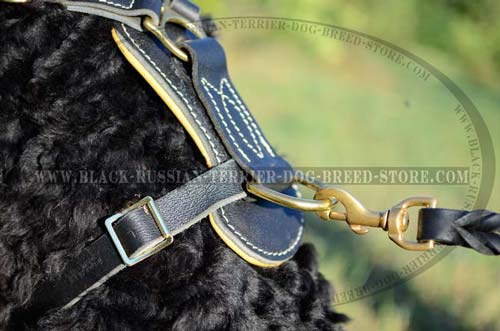 Exclusive Studded Leather Harness