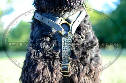 Comfortable Black Russian Terrier Dog Harness with Adjustable Straps