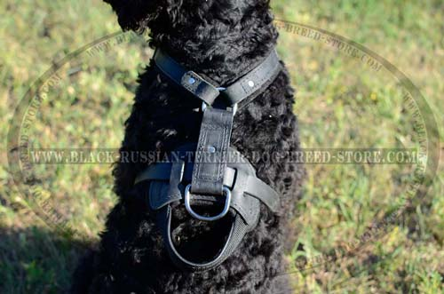 Handmade leather Black Russian Terrier harness