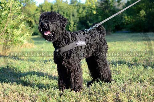 Light Weight Nylon Russian Terrier Harness