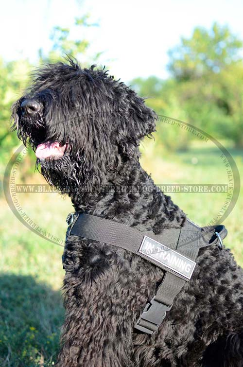 Strong Nylon Russian Terrier Harness for Pulling
