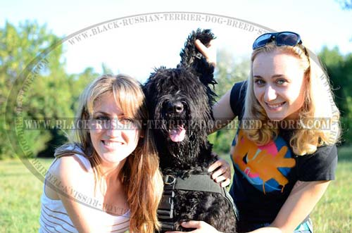 Walking Nylon Black Russian Terrier Harness