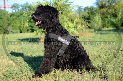 Durable Nylon Russian Terrier Harness for Training