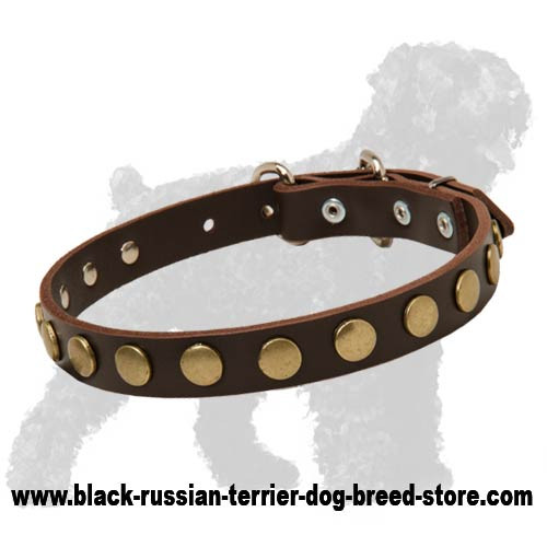 Top Quality Leather Russian Terrier Collar with Hand Set Circles