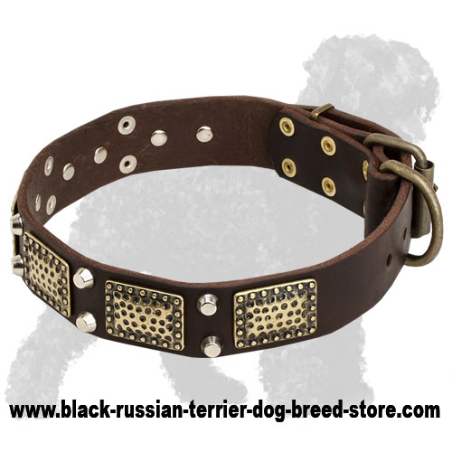 Royal Leather Russian Terrier Collar with Old Massive Vintage Plates and Nickel Cones