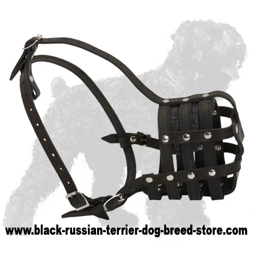 Everyday Easy Wearing Black Russian Terrier Muzzle