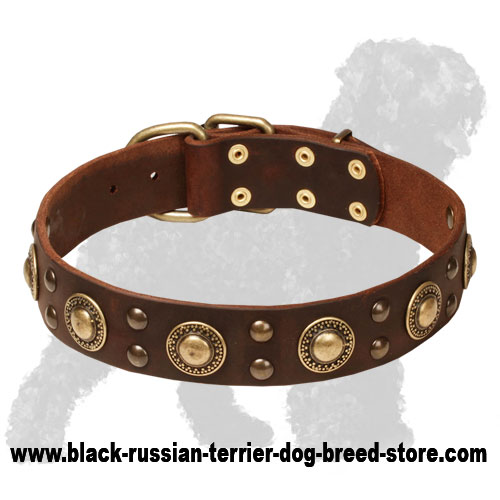 Skillfully Decorated Leather Russian Terrier Collar with Brass Circles and Studs