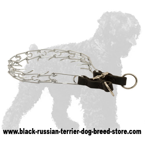 Chrome Plated Steel Black Russian Terrier Pinch Collar