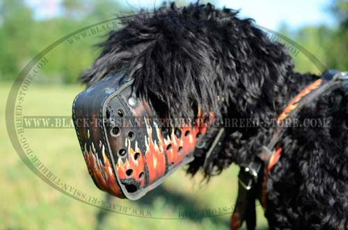 Provides great air flow for your Black Russian Terrier