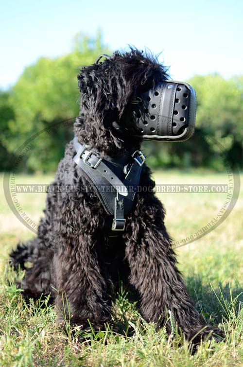 Handmade soft durable leather Black Russian Terrier muzzle