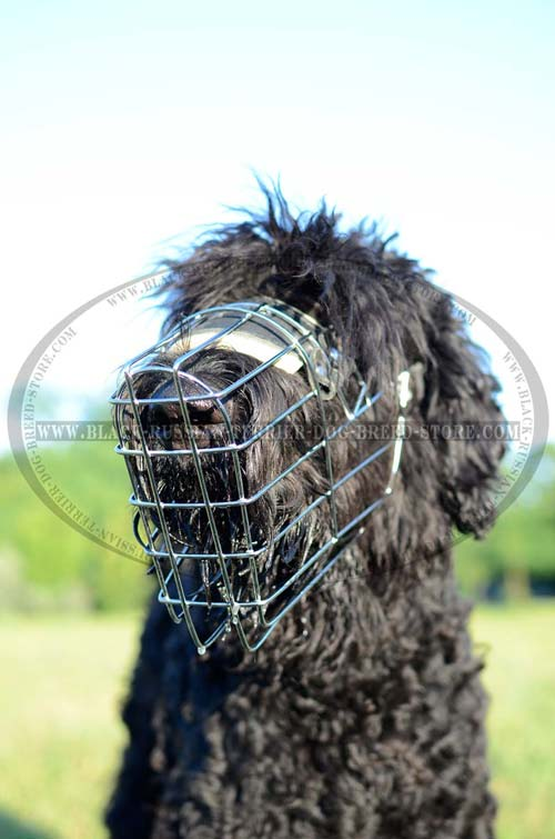 Strong wire basket Black Russian Terrier muzzle