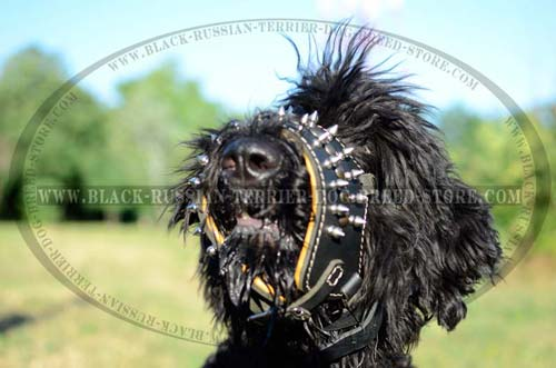 No-bite muzzle for Black Russian Terrier