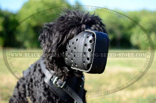 Handmade leather muzzle for Black Russian Terrier
