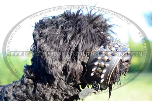 Exclusive leather muzzle for Black Russian Terrier