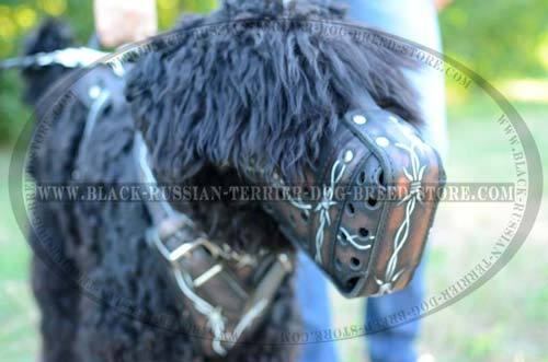 Agitation leather muzzle for Black Russian Terrier