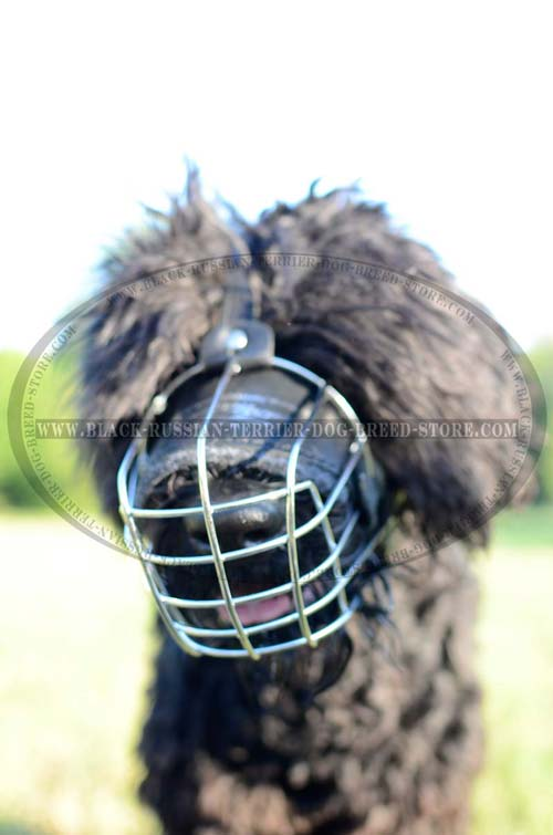 Training wire basket muzzle for Black Russian Terrier